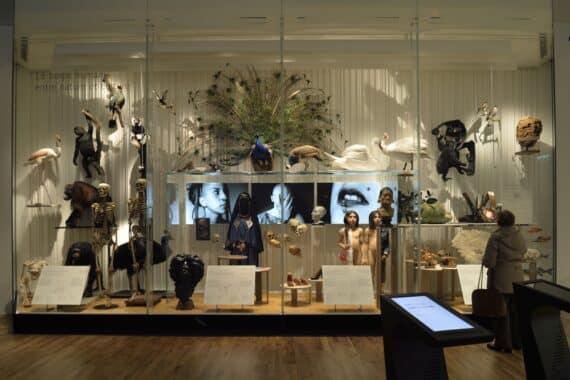 La Galerie de l'Homme - Partie 1 - Vitrine Le corps humain entre nature et culture © Jean-Christophe Domenech - MNHN