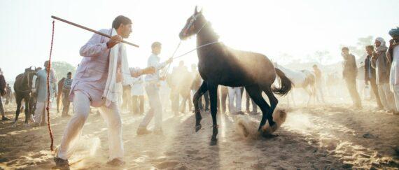 India-Rajasthan-in-Cinemascope-Genaro-Bardy-10-1024x436
