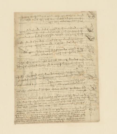 Léonard de Vinci Le Vol des oiseaux c. 1505 • Plume, encre et traces de sanguine 217 x 281 mm Veneranda Biblioteca Ambrosiana, Milan, CA f. 185r