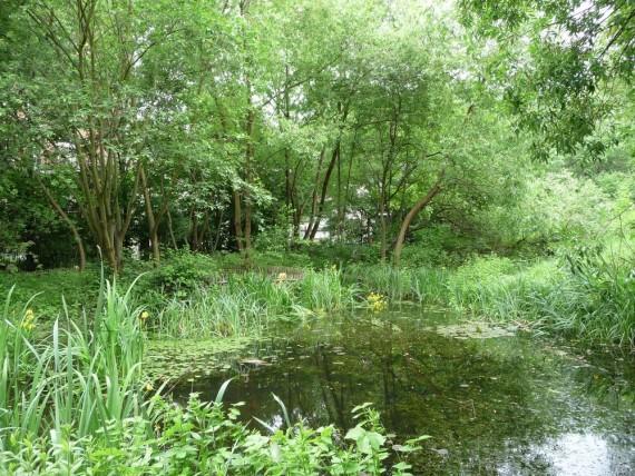 le jardin naturel 2