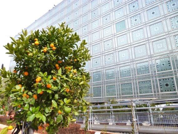 Expo Jardins d'Orient Institut du monde arabe 14