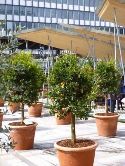 Expo Jardins d'Orient Institut du monde arabe 22
