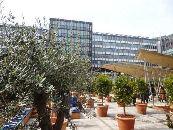 Expo Jardins d'Orient Institut du monde arabe 23
