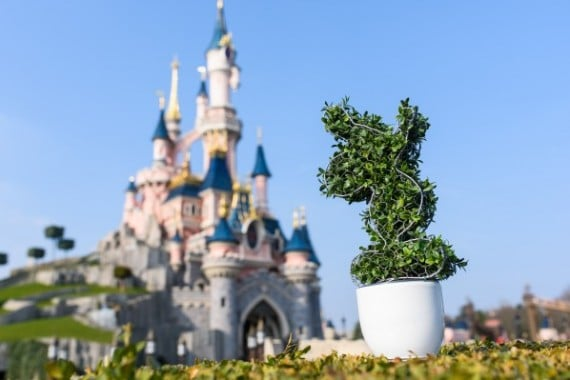 topiaire_mickey_buis_pot_disneyland_paris_avril_2016_2